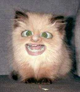 uglycat1